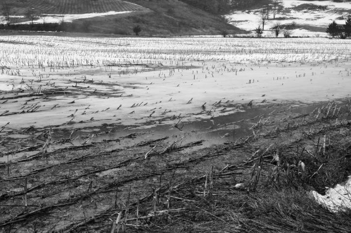 Mud 11 BW_resize