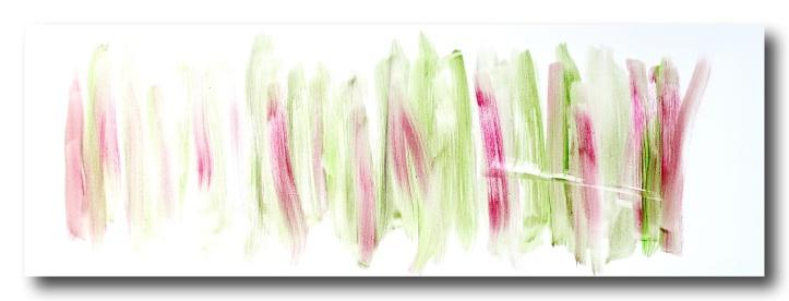 rhubarb in the Spring.JPG